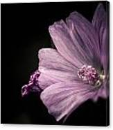 Purple Flower Surrounded With Black Canvas Print