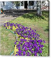 Purple Flowerbed Canvas Print
