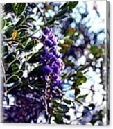 Purple Flowering Tree Canvas Print