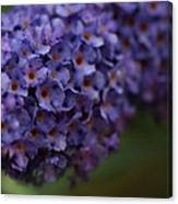 Purple Flowers 1 Canvas Print