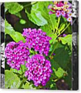 Purple Flowers A Canvas Print