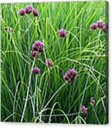 Purple Flowers And Grasses Canvas Print