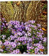 Purple Flowers At Base Of Tree Canvas Print