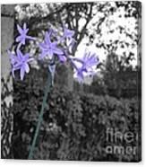 Purple Flowers Canvas Print