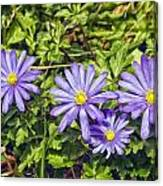 Purple Flowers Lookiing Like Daisies Canvas Print