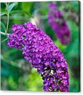 Butterfly Bush Garden Flower Canvas Print