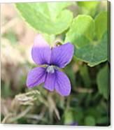 Purple Garden Flower Canvas Print
