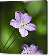 Purple Geranium Flowers Canvas Print