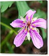 Purple Geranium Canvas Print
