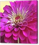 Purple Giant Zinnia Canvas Print