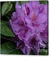 Purple Glory Canvas Print