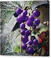 Purple Grapes - Oil Effect Canvas Print
