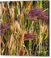 Purple Grasses Canvas Print