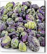 Purple Green Brussels Sprouts Canvas Print