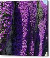 Purple Hanging Flowers Canvas Print