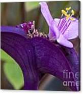 Purple Heart Flower Canvas Print