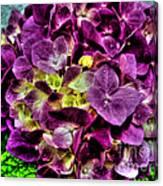 Purple Hortensia After Summer Rain Canvas Print