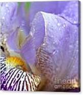 Purple Iris - 3 Canvas Print