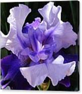 Purple Iris Bloom Canvas Print