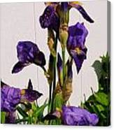 Purple Iris Stalk Canvas Print