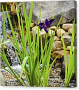 Purple Irises Growing In Waterfall Canvas Print