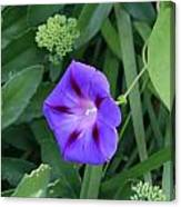 Blume-bestaubung Canvas Print