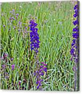 Purple Larkspur In A Meadow In Yellowstone National Park-wyoming Canvas Print