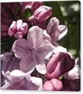 Purple Lilac Canvas Print