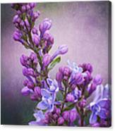 Purple Lilacs Canvas Print