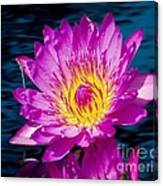 Purple Lily On The Water Canvas Print