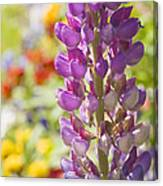Purple Lupine Flowers Canvas Print
