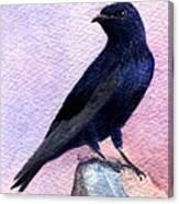 Purple Martin Canvas Print