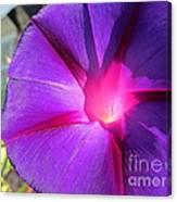 Purple Morning Glory - Flower Canvas Print