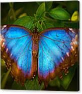Purple Morpho Butterfly Canvas Print