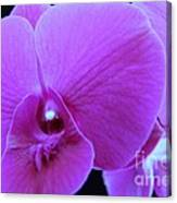 Purple Orchid 7 Canvas Print