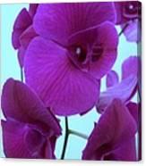Purple Orchids 3 Canvas Print
