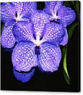 Purple Orchids - Flower Art By Sharon Cummings Canvas Print