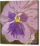 Purple Pansy 1 Canvas Print