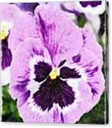 Purple Pansy Close Up - Digital Paint Canvas Print