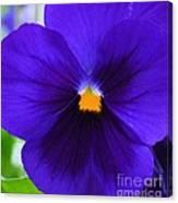 Purple Pansy Closeup Canvas Print