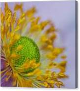 Purple Pastel Daisy Canvas Print