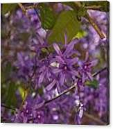 Purple Perfection Canvas Print