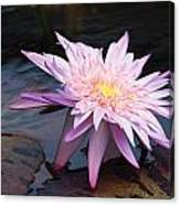 Purple Pink Yellow Waterlily... Canvas Print