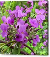 Purple Popping 2 Canvas Print