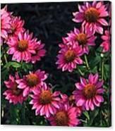 Purple Pow Echinacea  Canvas Print