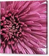 Purple Pow Canvas Print