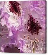 Purple Rhodo Canvas Print