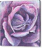 Purple Rose 2-14 Canvas Print