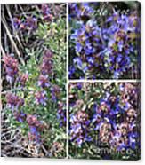 Purple Sage Collage Canvas Print