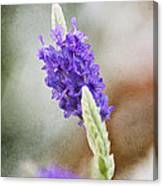 Purple Sage Texture Canvas Print